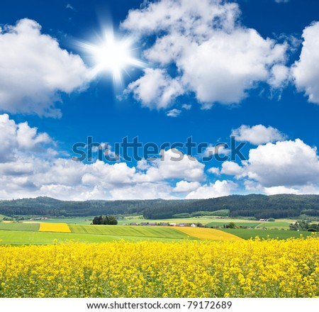 rapeseed field over cloudy blue sky - stock photo