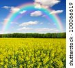 rapeseed field with rainbow - stock photo