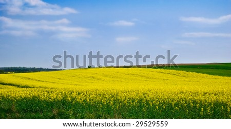 Rapeseed fields under the blue sky
