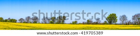 Rapeseed landscape with yellow and green fielda in blue sky in panorama - stock photo