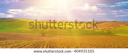 Rapeseed yellow sunny fields in spring with blue sky and green hills,  natural eco seasonal  background, panorama - stock photo
