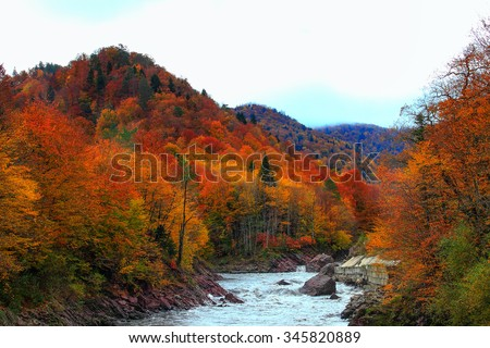 Rapid mountain river for White in a narrow channel where rocks and autumn beautiful forest.  - stock photo