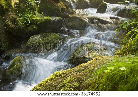 Rapid stream through the forest - stock photo