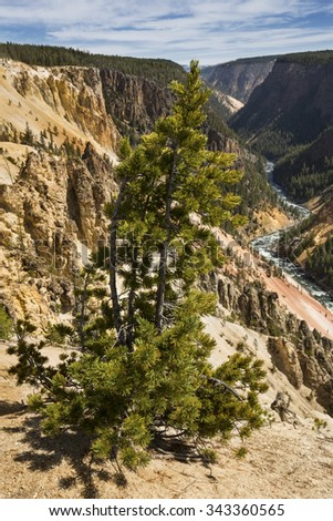 Rapids in the winding course of the Yellowstone River, at the bottom of a deep ravine, with lone pine at the top, at Grand Canyon of the Yellowstone in Wyoming. - stock photo