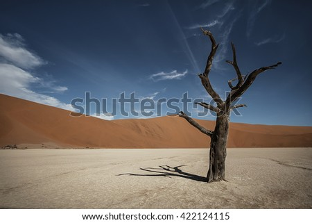 Rare Namibian desert landscape. Dry dead tree. Red sand dunes, white waterless soil and blue dark sky. (Namibia, South Africa)