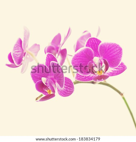 Rare purple orchid with retro filter effect.. Closeup.