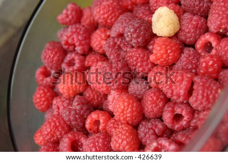 Rasberry - stock photo