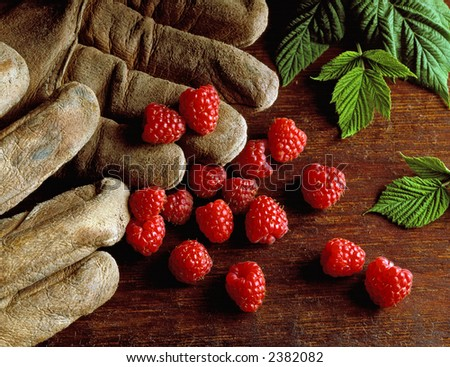 raspberries and gloves on old wood board - stock photo