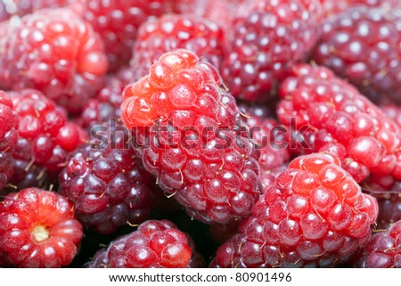 Raspberries and loganberries. - stock photo