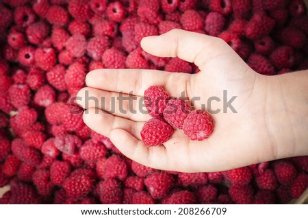 raspberries in a palm