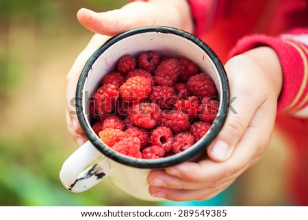 Raspberries in cup on a children hands. Macro image. - stock photo