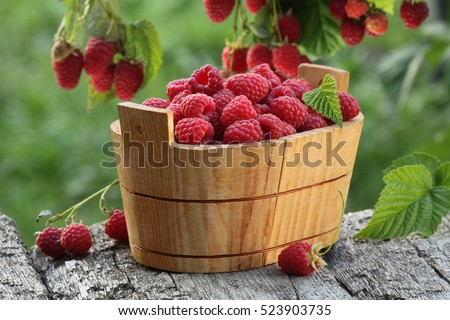 Raspberry basket / raspberry bush