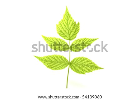 Raspberry branch - stock photo