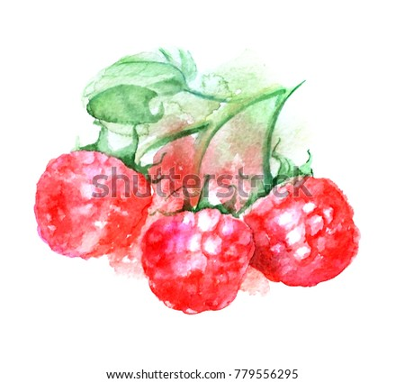Raspberry branch with green leaf watercolor sketch, illustration