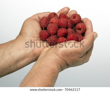 raspberry in palm - stock photo