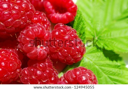 raspberry on a background of leaves