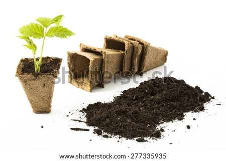 Raspberry plant, soil, peat pots on white background