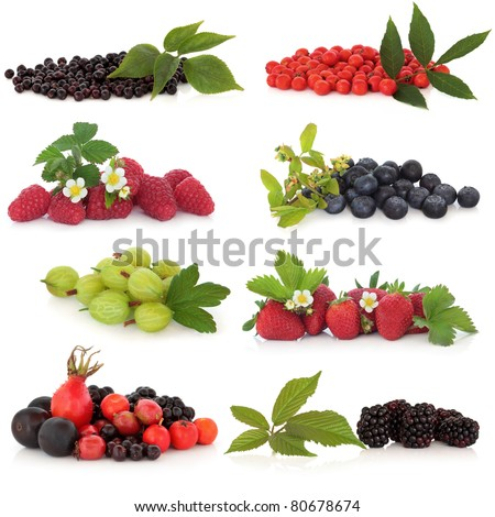 Raspberry, strawberry, gooseberry, blueberry, blackberry, elderberry, rowan, rose hip and sloe, fruit, isolated over white background. - stock photo