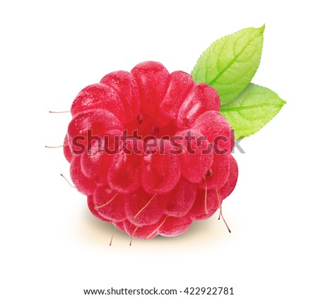 Raspberry with leaves and clipping path isolated on white background. Fresh Raspberry with work path isolated. Juicy Raspberry. Sweet Raspberry. Isolated Raspberry. - stock photo