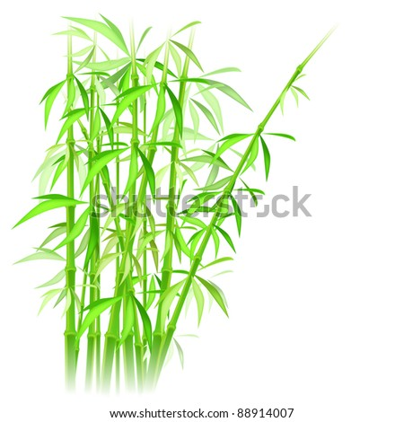 raster - bamboo illustration (vector version is available in my portfolio) - stock photo