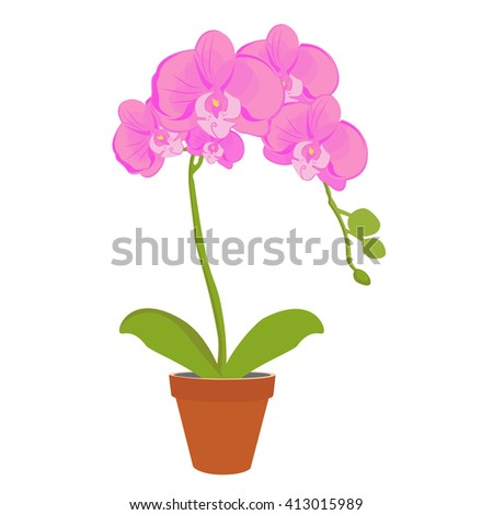 Raster illustration exotic pink orchid flower in a pot. Phalaenopsis orchid blooming in a pot