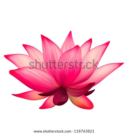 Raster realistic lotus flower isolated on white background - stock photo