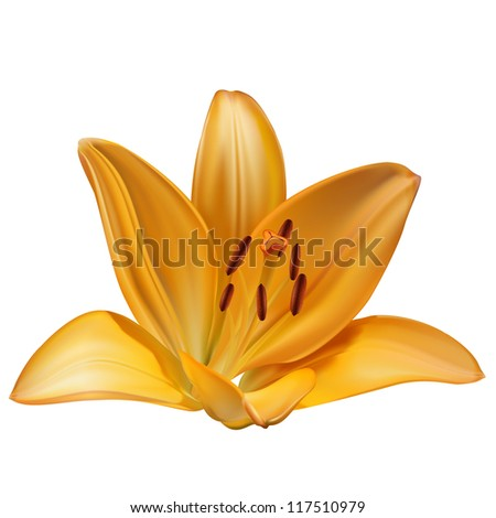 Raster realistic yellow lily isolated on white background - stock photo