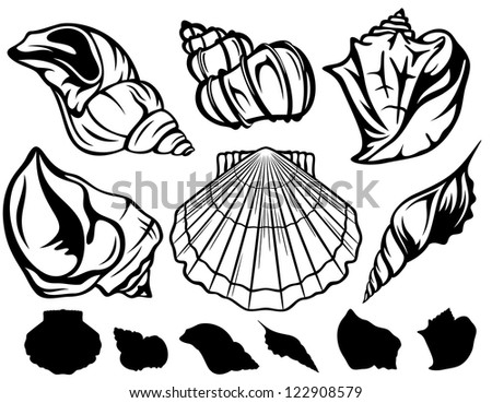 raster - set of black and white sea shells - collection of fine outlines and silhouettes (vector version is available in my portfolio) - stock photo