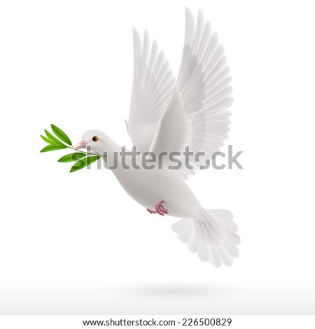Raster version. Dove of peace flying with a green twig in  beak on white background  - stock photo
