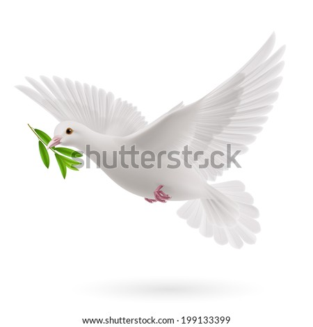 Raster version. Dove of peace flying with a green twig olive after flood on white background - stock photo