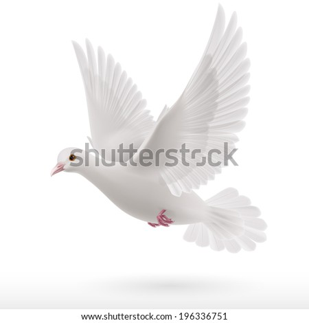 Raster version. Flying white dove on white background as symbol of peace - stock photo