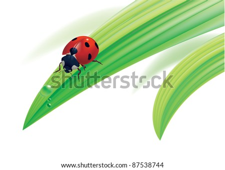 Raster version.  illustration. Ladybird on grass with water drops.