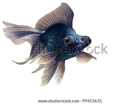 Eye Telescope Telescope Eye Toy Fish