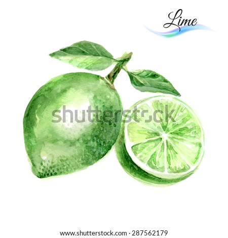 Raster version. Watercolor fruit lime isolated on white background  - stock photo