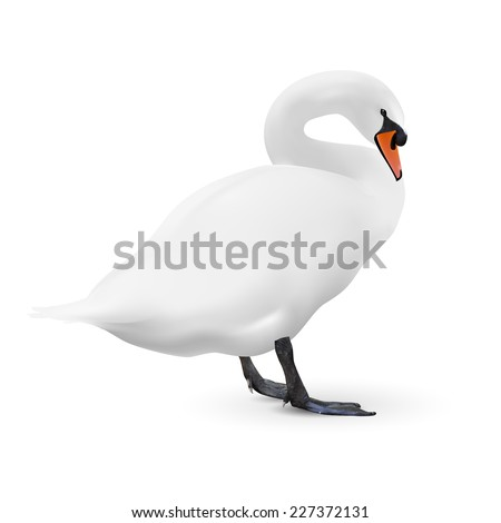 Raster version. White swan isolated on white background with a shadow, image  - stock photo