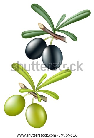 Rasterized version of collection vector olives. Isolated over white