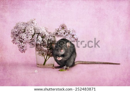 rat and a bouquet of lilacs - stock photo