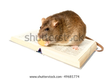 Rat and the book on white background close up - stock photo