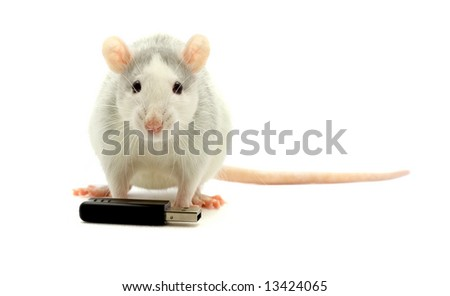 Rat and usb-flash on a white background - stock photo