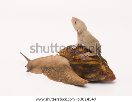 Rat baby on a snail - stock photo