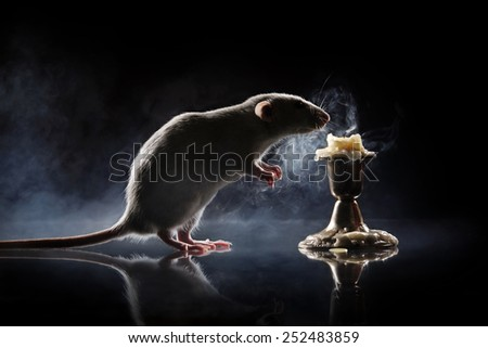 rat blows out the candles - stock photo