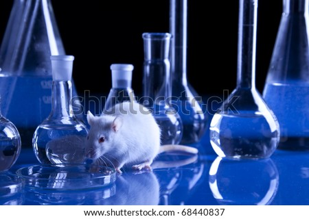 Rat in laboratory, tests on animal. Experiments - stock photo