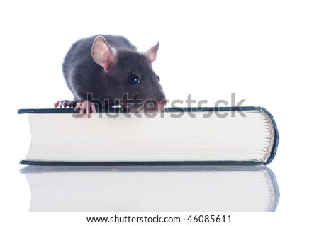 rat sits on the open book - stock photo