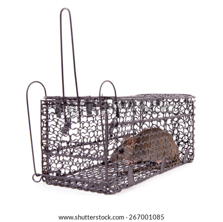rat trap on white background - stock photo