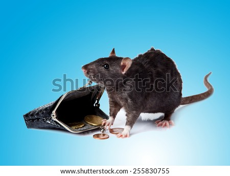 rat with a purse.   mouse  with money - stock photo