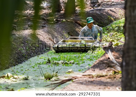 Ratchaburi,Thailand - February 26, 2012: A man picks up the coconut up from the watercourse in the garden and these coconuts are being sold to dealer.