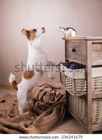 Rats and dog on a retro background - stock photo