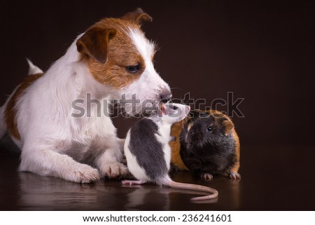 Rats and guinea pigs and dog on a retro background - stock photo