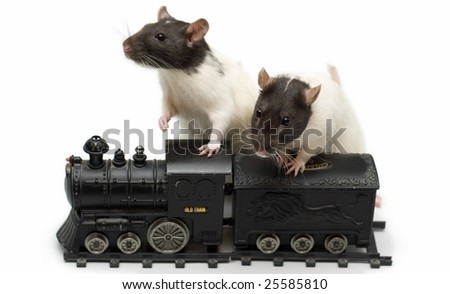 Rats with train - stock photo