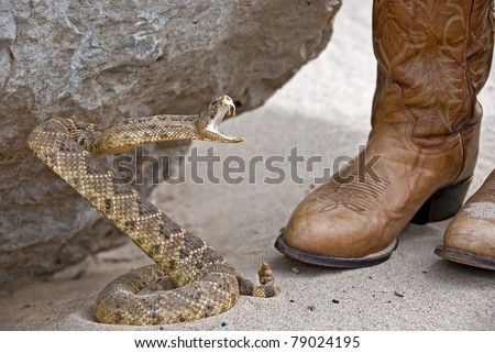 rattle snake attacking - stock photo